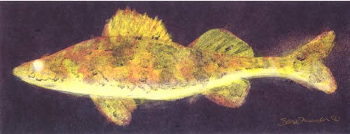 Walleye II